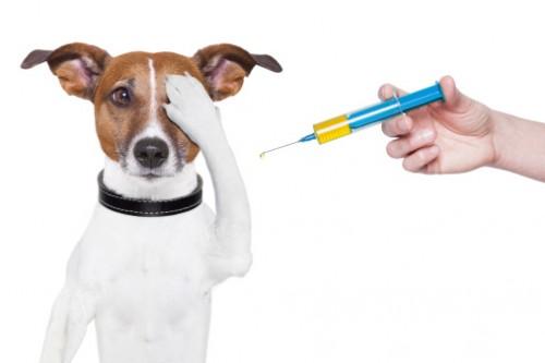 medicină veterinară comună umflarea articulației genunchiului fără tratament